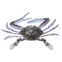 Queensland East Coast Blue Swimmer Crab