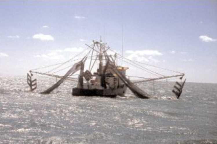 Queensland East Coast Trawl