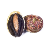 New South Wales Abalone